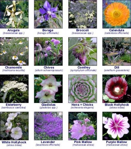 Uyenshop - Flowers