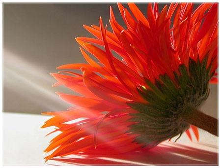 Hoa lụa, hoa giả Uyên shop, Tại sao nên chọn Hoa Lụa?