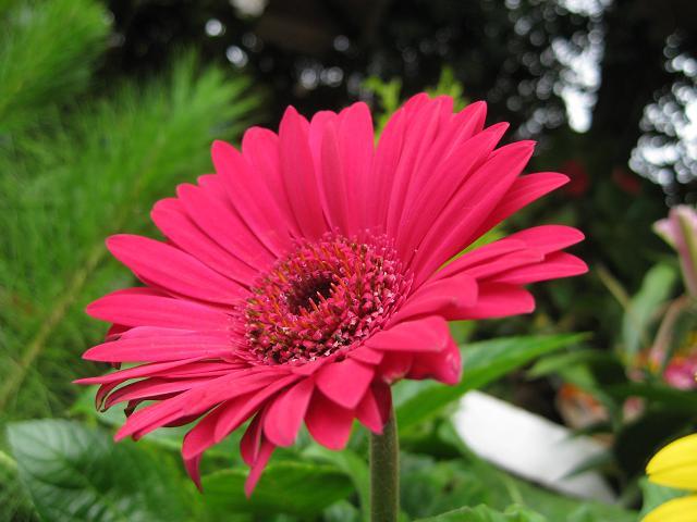 Hoa lụa, hoa giả Uyên shop, Các bước cắm hoa tự nhiên dành cho bạn