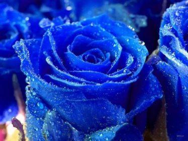 y-nghia-hoa-hong-xanh-2
