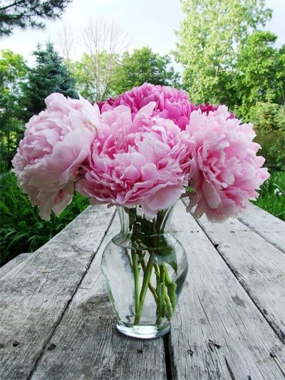 Hoa lụa, hoa giả Uyên shop, 6 loài hoa có ý nghĩa theo phong thủy