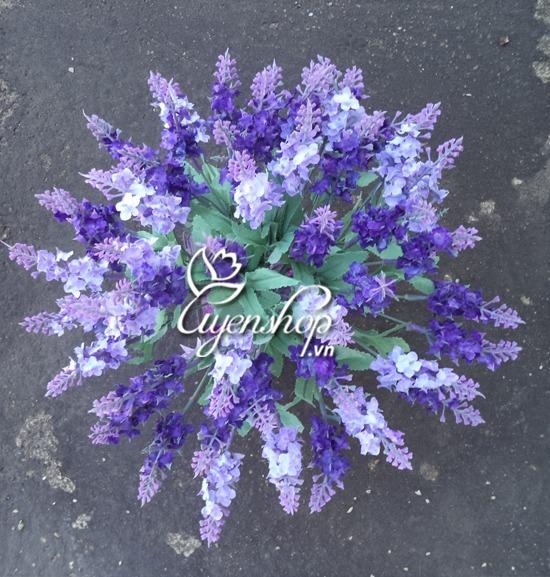 hoa lavender tim - hoa lua