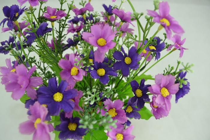 hoa canh - cuc tim - hoa gia