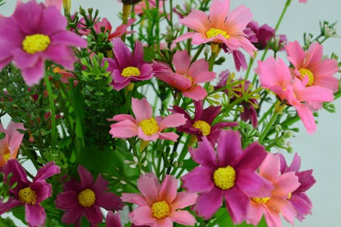 hoa cuc hong - hoa gia
