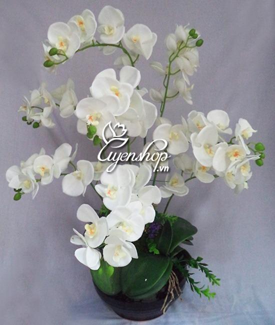 binh hoa lan ho diep - hoa gia