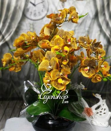 Hoa lụa, hoa giả Uyên shop, Chậu lan cao su