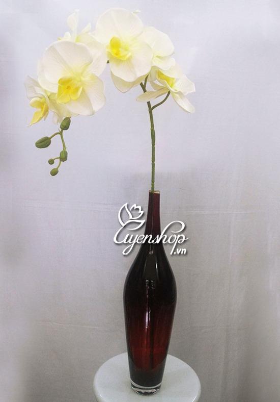 hoa lan trang - hoa lua uyenshop