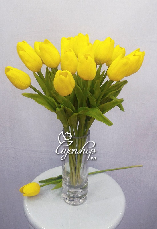 hoa tulip vang nho