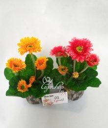 Hoa lụa, hoa giả Uyên shop, Cây đồng tiền