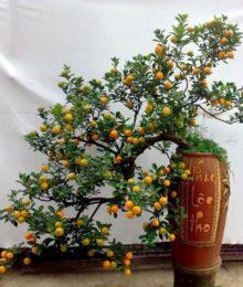 Hoa lụa, hoa giả Uyên shop, Chọn hoa đẹp nào trang trí phòng khách ngày Tết?