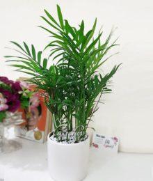 Hoa lụa, hoa giả Uyên shop, Cây Cau Tiểu Trâm
