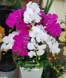 Hoa lụa, hoa giả Uyên shop, Chậu hoa lan trắng tím
