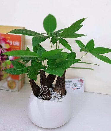 Hoa lụa, hoa giả Uyên shop, Kim Ngân Thủy Sinh