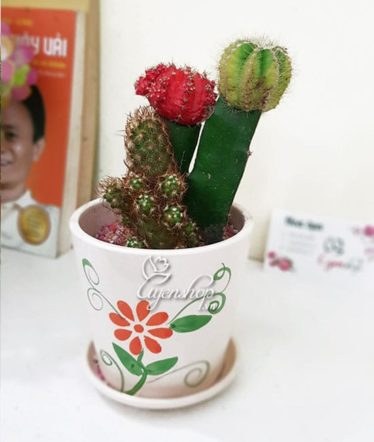 Hoa lụa, hoa giả Uyên shop, Xương rồng ghép