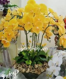 Hoa lụa, hoa giả Uyên shop, Chậu Lan Vàng cao cấp