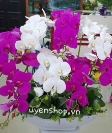 Hoa lụa, hoa giả Uyên shop, Thuyền hoa lan