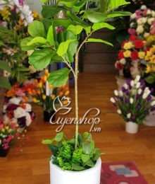 Hoa lụa, hoa giả Uyên shop, Cây bàng giả
