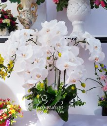 Hoa lụa, hoa giả Uyên shop, Bình Lan Trắng