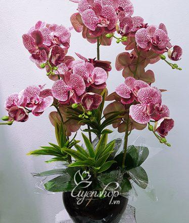 Hoa lụa, hoa giả Uyên shop, Bình Hoa Lan Đốm