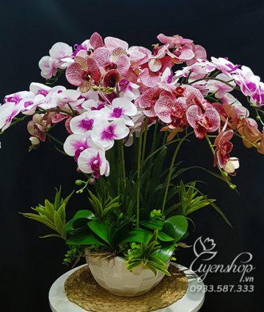 Hoa lụa, hoa giả Uyên shop, Chậu Lan Trắng Tím Sang Trọng