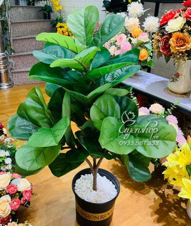 Hoa lụa, hoa giả Uyên shop, Cây Bàng Singapore 3 Nhánh